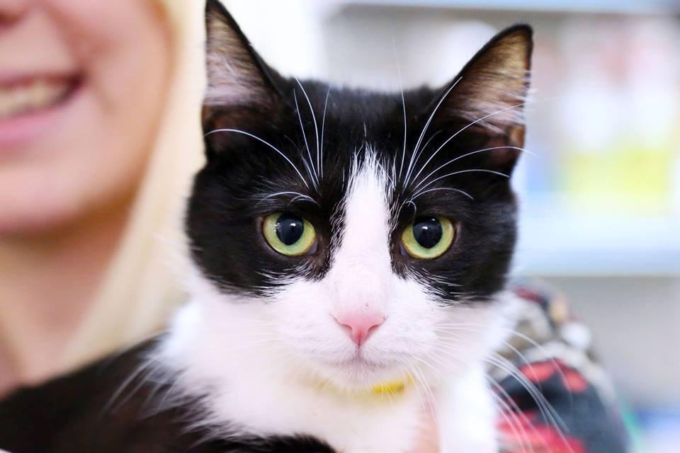 Cat's Cradle | Animal Rescue | Harrisonburg, VA